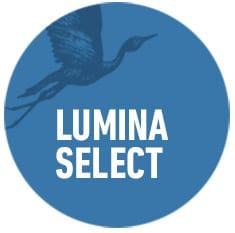 lumina-select-organisational-development-circles-think-forward
